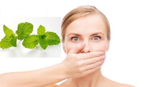 Mẹo chữa hôi miệng bằng lá bạc hà cực hiệu quả ngay tại nhà